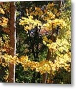 Fall Forest 3 Metal Print