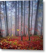 Fall Forest In Fog Metal Print