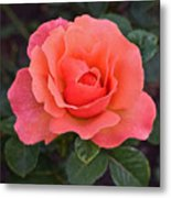 Fall Gardens Rosh Hashana Rose Metal Print