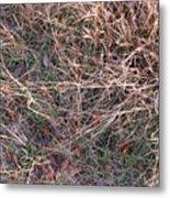 Fall Grasses Metal Print
