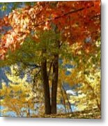 Fall In Kaloya Park 4 Metal Print