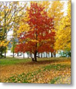 Fall In Kaloya Park 5 Metal Print