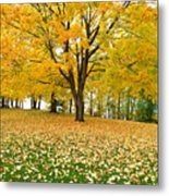 Fall In Kaloya Park 7 Metal Print