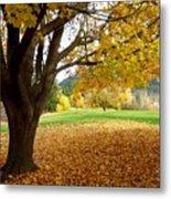 Fall In Kaloya Park 8 Metal Print