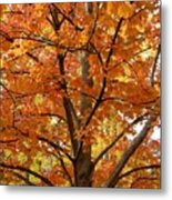 Fall In Kayloya Park 2 Metal Print