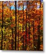 Fall In Ontario Canada Metal Print