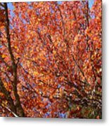 Fall In The Blue Ridge Mountains Metal Print