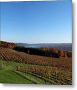 Fall In The Vineyards Metal Print