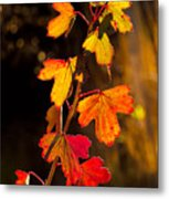Imperfection Perfection Metal Print