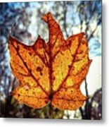 Fall Is In The Air Metal Print