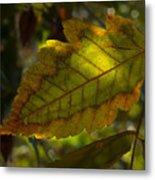 Fall Leaf 2010 Metal Print