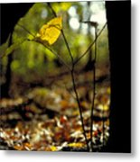 Fall Leaf And Twig Metal Print