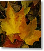 Fall Leaf Litter Metal Print