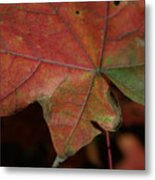 Fall Leaves 1 Metal Print