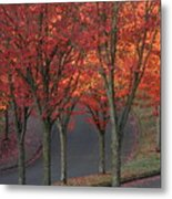 Fall Leaves Along A Curved Road Metal Print