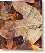 Fall Leaves And Dew 8 2017 Metal Print