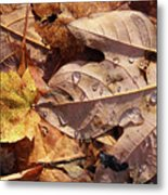 Fall Leaves And Dew 9 2017 Metal Print