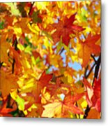 Fall Leaves Background Metal Print