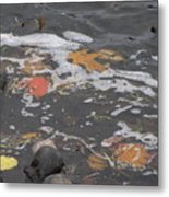 Fall Leaves Floating On The River Metal Print