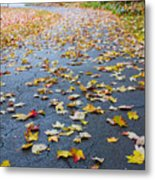 Fall Leaves Metal Print by Michael Tesar