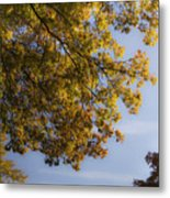 Fall Magic Metal Print