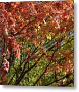 Fall Maples Green Gold Metal Print