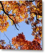 Fall Oak Leaves Up Above Metal Print