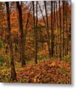 Fall On The Ice Age Trail Metal Print