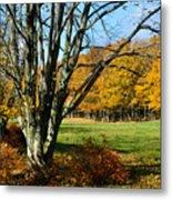 Fall Pasture Metal Print