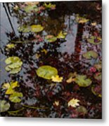 Fall Pond Reflections - A Story Of Waterlilies And Japanese Maple Trees - Take One Metal Print