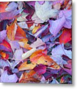 Fall Purples  Metal Print