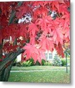 Fall Reds Metal Print