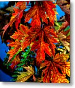 Fall Reds Metal Print by Robert Bales