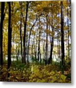 Fall Series 3 Metal Print