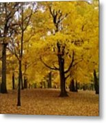 Fall Series 5 Metal Print