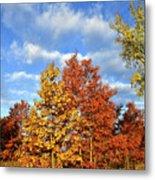 Fall Sunrise On Hackmatack Nwr Oaks Metal Print