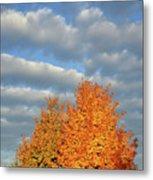Fall Sunrise On Sugar Maple Along Route 31 Metal Print