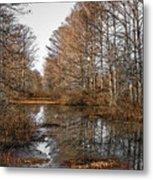 Fall Swamp Metal Print