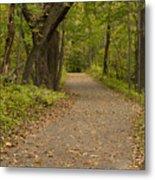Fall Trail Scene 45 A Metal Print