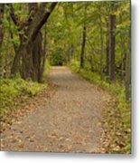 Fall Trail Scene 45 B Metal Print