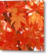 Fall Tree Art Autumn Leaves Red Orange Baslee Troutman Metal Print