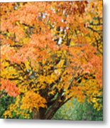 Fall Tree Art Print Autumn Leaves Metal Print