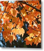 Fall Tree Art Prints Orange Autumn Leaves Baslee Troutman Metal Print