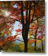 Fall Tree Colors I Metal Print