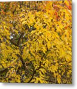 Fall Tree Leaves 2 Metal Print