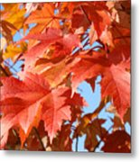 Fall Tree Leaves Art Prints Blue Sky Autumn Baslee Troutman Metal Print