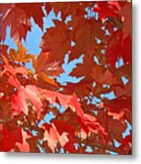 Fall Tree Leaves Red Orange Autumn Leaves Blue Sky Metal Print