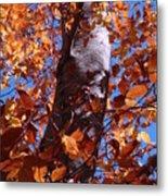 Fall Tree Metal Print
