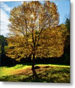 Fall Tree Silhouette Kent Falls State Park Connecticut Metal Print