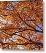 Fall Tree With Star Burst Metal Print